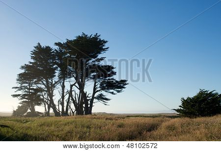 Trees Near The Coast In Northern California