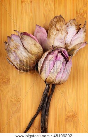 Bouquet of dead lotus