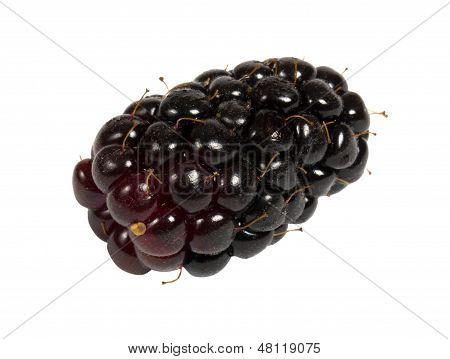 One isolated blackberry on white background