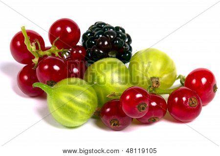 Fresh Berries Isolated