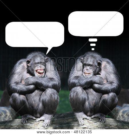 Two chimpanzees having a fun.