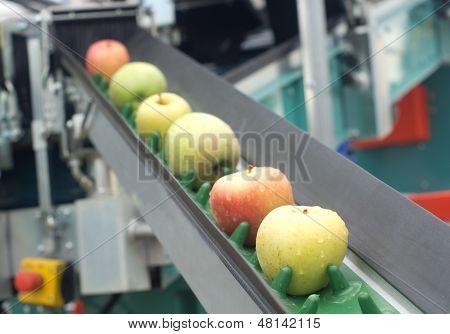 Apple conveyor belt