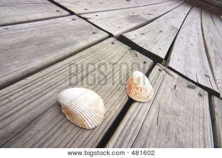 Shells On The Boardwalk