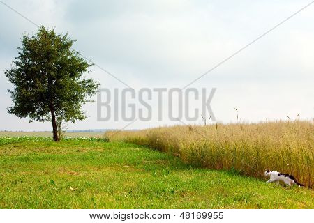Landscape With A Tree And Cat