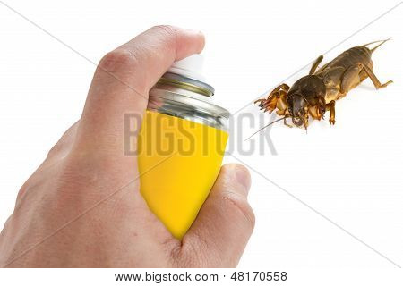 Pest control spraying insecticide on the mole cricket poster