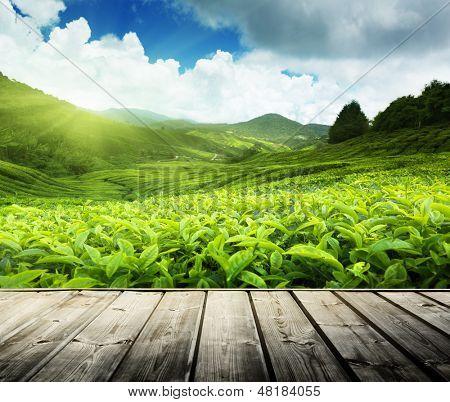 wood floor on tea plantation Cameron highlands, Malaysia  poster