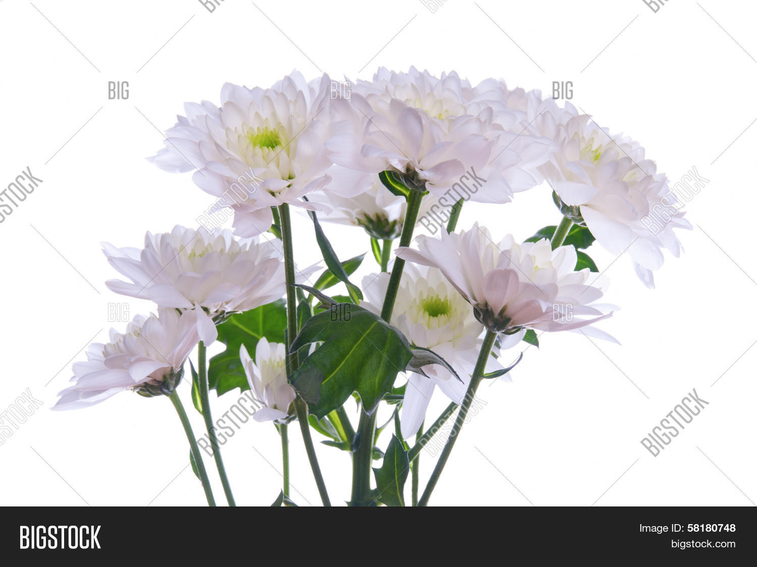 Bunch White Flowers Image Photo Free Trial Bigstock