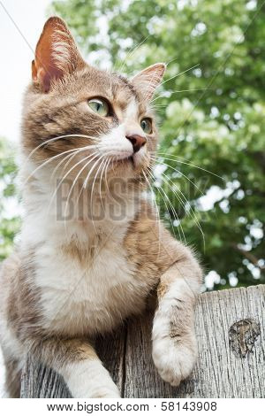 Brown And White Cat Sitting On A Wooden Fence
