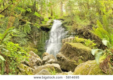 Merriman Falls, Quinault Rainforest, Olympic National Park