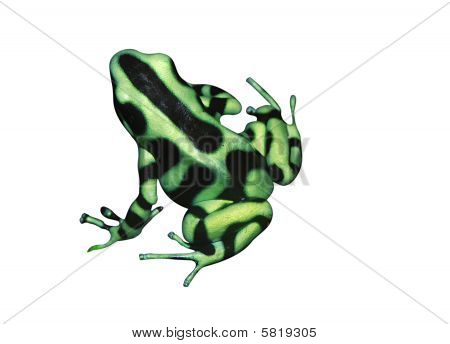 Beautiful tropical frog Dendrobates auratus (green and black poison dart) poster