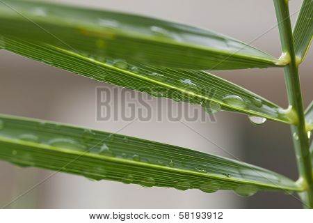 several water beads on a plant leaf poster