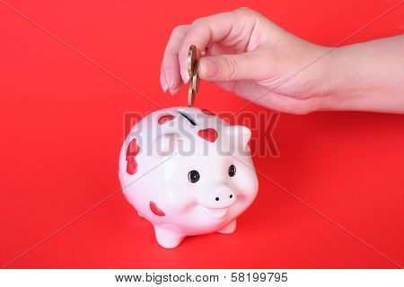 Pig-coin Box And Female Hand