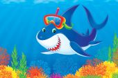 Great white shark wearing the diver mask and snorkel is swimming against the colorful coral reef. This high resolution image was drawn in Photo Shop. Please view my portfolio to search for the thousands of illustrations and clip-arts. poster