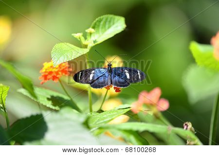 Sara longwing butterfly perched on flower during sunny day