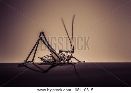 Abstract Image Of A Grasshopper