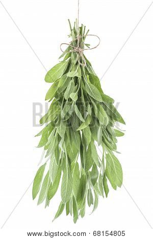 Bunch Of Sage Fresh Leaves On A White Background