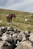 Horse and Sayan mountain landscape poster