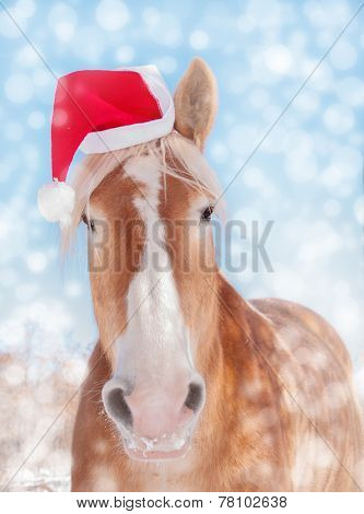 Dreamy image of a Belgian draft horse wearing a Santa hat, looking straight at viewer