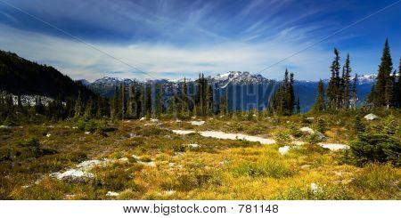 Pine trees and snow peaks