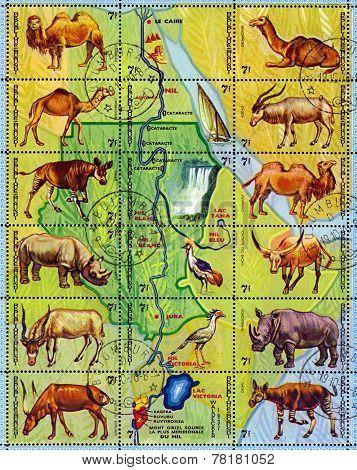 Vintage  Postage Stamp. Animals Burundi.