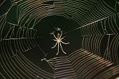spider waiting prey in center of web with evening sunlight poster