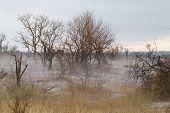 Fog at Kruger park after an hailstorm poster