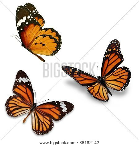 Three Monarch Butterfly
