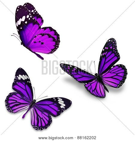 Three Purple Butterfly