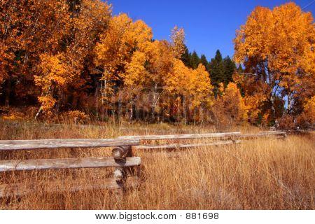 Autumn Fence 3