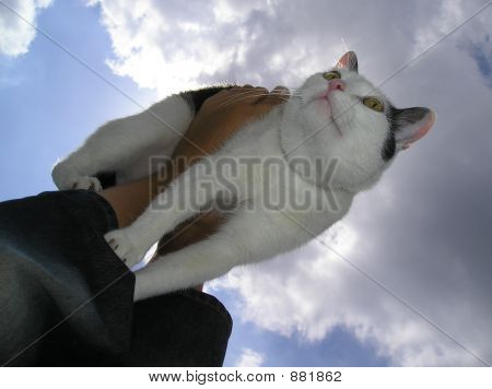 Cat Across The Sky And Clouds