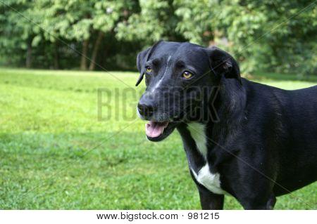 Dog0614