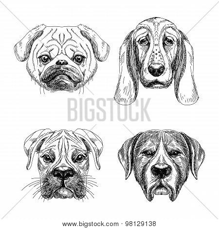 Vector hand drawn set of four dog's faces.