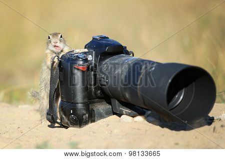 European Ground Squirrel With Professional Camera And Open Mouth