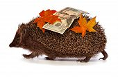 The hedgehog in motion hastens home from the bank carrying twenty percent dollar profit poster