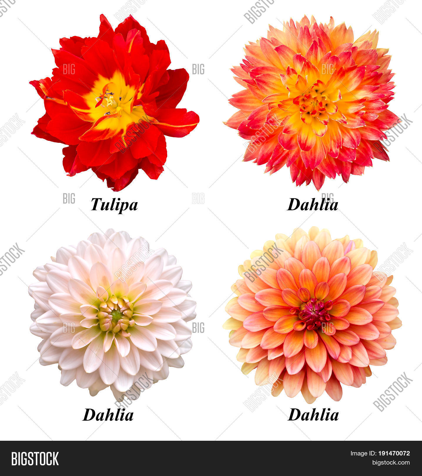 Set Four Flowers Image Photo Free Trial Bigstock