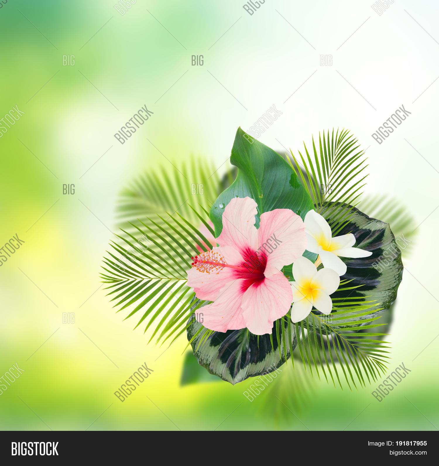 Tropical Fresh Flowers Image Photo Free Trial Bigstock