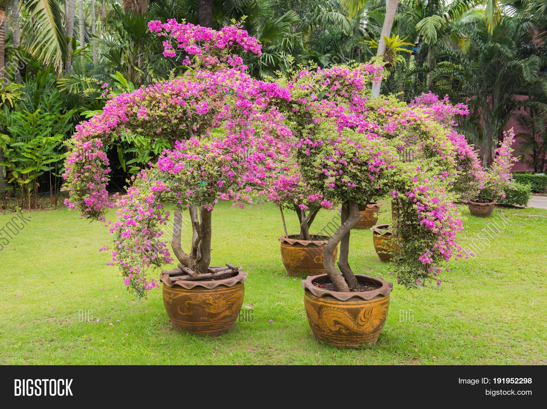traditional decorative garden of Nong Nooch Tropical Botanical Garden , Pattaya, Thailand