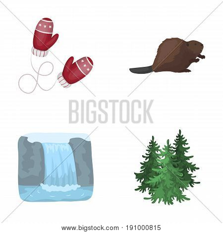 Canadian fir, beaver and other symbols of Canada.Canada set collection icons in cartoon style vector symbol stock illustration .