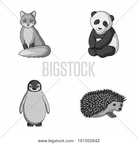 Fox, panda, hedgehog, penguin and other animals.Animals set collection icons in monochrome style vector symbol stock illustration .