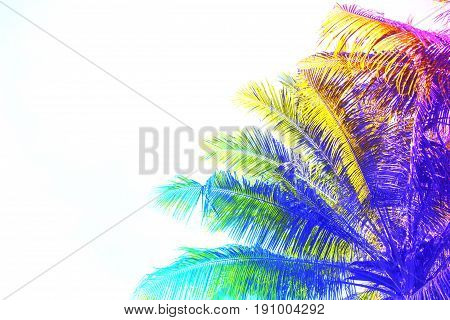 Rainbow colored palm tree crown on sky background. Fantastic toned photo with coco palm tree on white. Tropical wedding invitation. Exotic vacation banner template. Unicorn palm tree. Summer travel