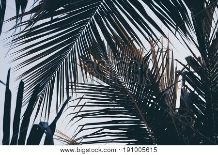 Green palm leaf over sky background. Beautiful palm leaf photo with moody effect tone. Palm leaves background. Tropical nature vintage print or poster. Exotic vacation tourism banner. Instagram filter