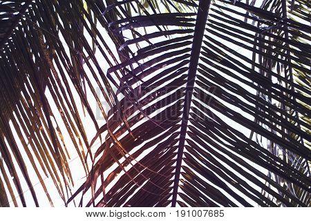 Green palm leaf on sunset sky background. Beautiful palm leaf photo on sunset. Palm leaves background. Tropical nature vintage print. Exotic vacation tourism banner. Zen wanderlust poster