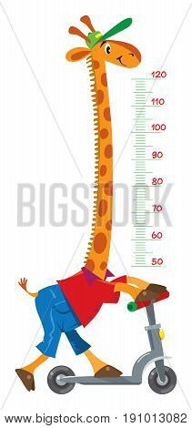 Cheerful funny giraffe on scooter. Height meter or meterwall or wall sticker. Childrens vector illustration with scale from 50 to 120 centimeter to measure growth