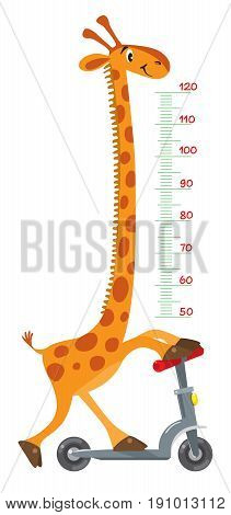 Cheerful funny giraffe on scooter. Height chart or meter wall or wall sticker. Childrens vector illustration with scale from 50 to 120 centimeter to measure growth