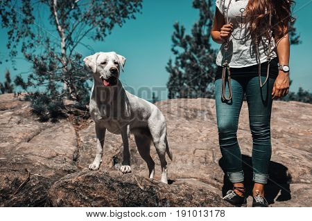 young woman and cute labrador retreiver dog puppy during a hike on a mountain in front of blue sky