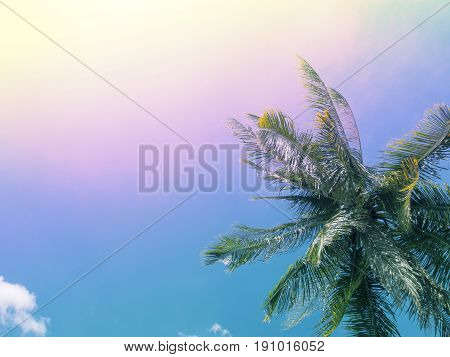 Tropical summer sky with palm tree. Tropical island rainbow toned photo. Exotic vacation banner template with place for text. Coco palm tree crown on sky background. Coconut palm leaves under sunlight