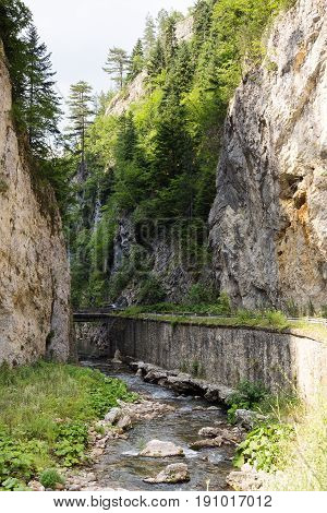 Narrow motor road along a mountain river in the gorge of the Rhodope Mountains abundantly overgrown with deciduous and evergreen forest at sunny summer day (Trigradskoto Zhdrelo Bulgaria)