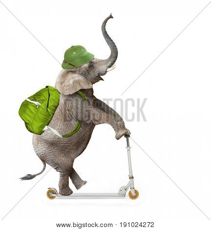 Happy elephant as a adventurer on push scooter going to holidays. Animal isolated on white background. Digital collage on leisure activities theme.