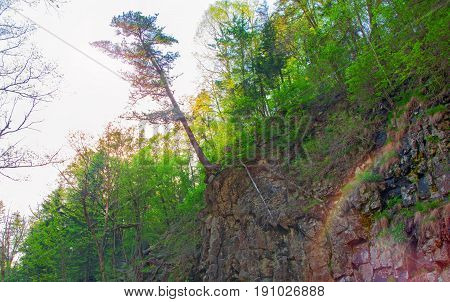 big tree hanging on the edge of the cliff, steep rock and edge keeps the roots of a tree. solar rays