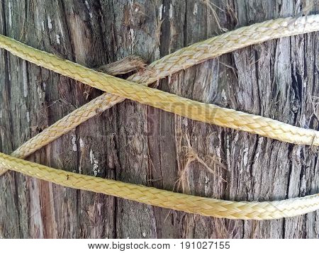 tree trunk with frayed yellow rope on it